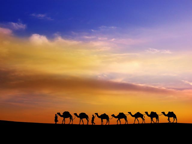Camels in the Sunset, Middle East Cruise